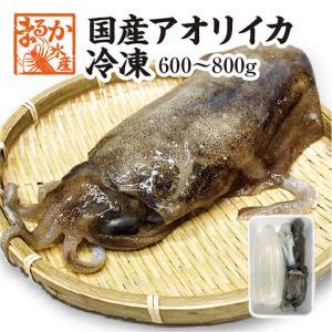天然アオリイカ 国産 Mサイズ 600/800g冷凍[魚介類]|isemaruka