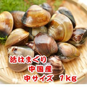 活はまぐり 中サイズ 20〜25個 1kg分 [はまぐり]|isemaruka