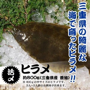 活〆 ヒラメ  三重県産(養殖)1枚 800g [魚介類]|isemaruka
