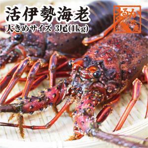 活伊勢エビ 3尾 1kg 三重県産 高級[伊勢海老]|isemaruka