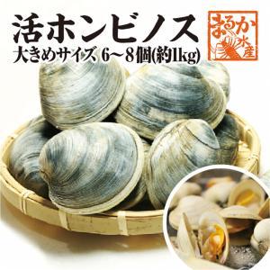 活ホンビノス貝 大サイズ  6〜8個入り 約1kg[貝類]