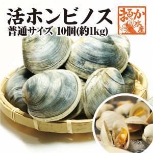 活ホンビノス貝 中サイズ  10個入り 約1kg[貝類]|isemaruka