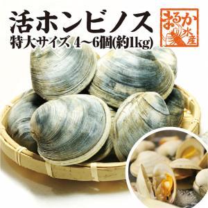 活ホンビノス貝 特大サイズ  4〜6個入り 約1kg[貝類]