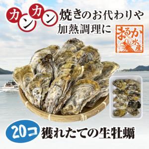 三重県産 殻付牡蠣 加熱用|isemaruka