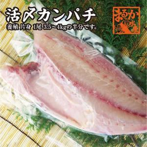 活〆カンパチ 片身 (養殖)1尾3kg〜3.5kgの半分です。|isemaruka