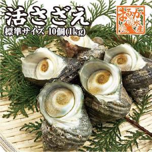 天然活さざえ 中サイズ 1kg 10個 70g〜110g [さざえ]|isemaruka