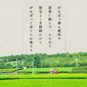 伊勢茶 初摘一番煎茶 70g メール便 送料無料 お茶 日本茶 三重県産 農薬・肥料不使用栽培|isesima|02