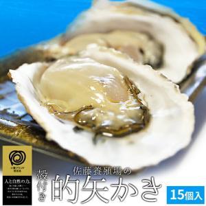 佐藤養殖場 的矢かき 殻付き 牡蠣 15個入り 送料無料 生食用 (手袋片手用・専用牡蠣ナイフ付) 冬季限定|isesima