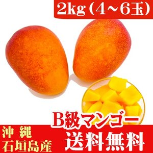 石垣島マンゴーB級品 2kg 4〜8玉 ishigakijimanoukatai