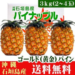 沖縄石垣島産ゴールド(黄金)パイン3kg(2〜4玉) 送料無料|ishigakijimanoukatai