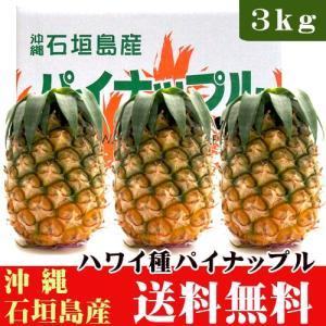 パイナップル(ハワイ種)石垣島産 3kg(3〜4玉)|ishigakijimanoukatai
