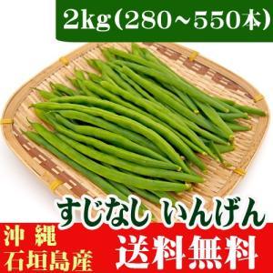 インゲン(すじなしいんげん)生野菜 2kg 業務用 送料無料|ishigakijimanoukatai