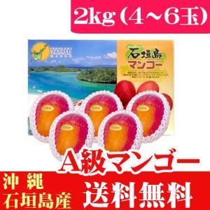 石垣島産完熟アップルマンゴー2kg 4〜6玉 当店最高品質A級品 ishigakijimanoukatai