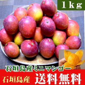 沖縄・石垣島産ミニマンゴー 1kg(約10〜20玉) ishigakijimanoukatai