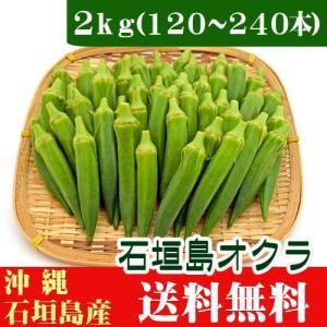 石垣島オクラ 生 2kg(120〜240本)|ishigakijimanoukatai