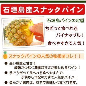石垣島パインセット スナックパイン・ピーチパイン 3kg 3〜5玉 沖縄 ishigakijimanoukatai 02