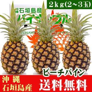 ピーチパイン 2kg 2〜3玉  石垣島産 沖縄 送料無料|ishigakijimanoukatai