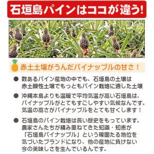 ピーチパイン 2kg 2〜3玉  石垣島産 沖縄 送料無料|ishigakijimanoukatai|03