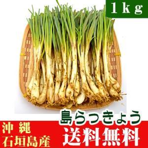 島らっきょう 1kg 石垣島産 沖縄|ishigakijimanoukatai