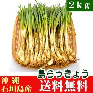 沖縄県産 島らっきょう 2kg(石垣島)  送料無料|ishigakijimanoukatai