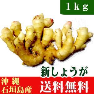 新生姜 1kg 沖縄石垣島産 送料無料|ishigakijimanoukatai