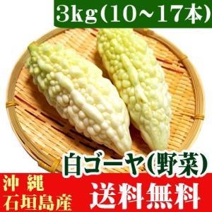 白ゴーヤー3kg(10〜17本) 沖縄県石垣島産 送料無料 ishigakijimanoukatai