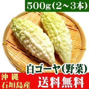 石垣島産 白ゴーヤ500g(2〜3本) 送料無料 ishigakijimanoukatai