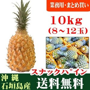 スナックパイン 10kg 8〜12玉 石垣島産 まとめ買い・ケース特価 ishigakijimanoukatai
