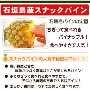 スナックパイン2kg(2〜3玉) 沖縄県石垣島産 送料無料|ishigakijimanoukatai|02