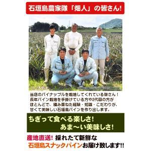 スナックパイン 6kg 6〜8玉 沖縄 石垣島産|ishigakijimanoukatai|04