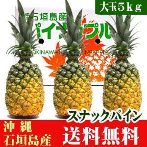 沖縄石垣島産スナックパイン 大玉5kg(3〜4玉) 送料無料 ishigakijimanoukatai