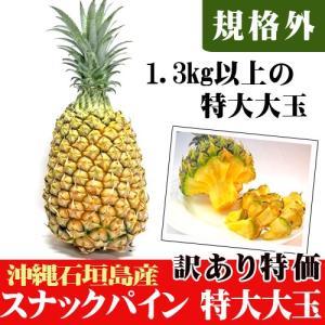 訳あり 特大大玉スナックパイン 約1.3kg以上 石垣島産 期間限定特価|ishigakijimanoukatai