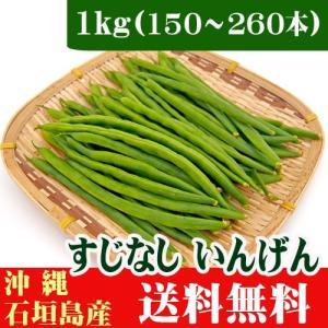 すじなしいんげん(生野菜)1kg 沖縄石垣島産 送料無料|ishigakijimanoukatai