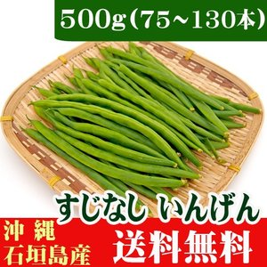 さやいんげん(すじなしいんげん)500g 石垣島産 送料無料|ishigakijimanoukatai