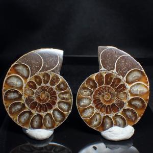 アンモナイト Ammonite デスモセラス Desmoceras 1ペア 化石 標本 写真現物 動画あり ishinomise