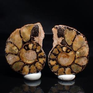 アンモナイト Ammonite スクロエンバキア Schloenbachia 1ペア ヘマタイト 化石 標本 写真現物 動画あり ishinomise