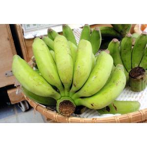 島バナナ 約1kg 沖縄・石垣島より