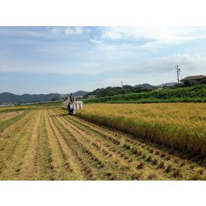 令和2年度産黒米(朝紫)玄米 200g 農薬・化学肥料不使用  iskwnouen