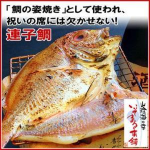 ■名称  ・連子鯛旬干し(一夜干し)130g前後 ※自社製造製品です  ■原材料名  ・レンコ鯛(島...