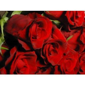 バラの花束 色と数 選べる 60〜99本のバラの花束 単価×本数|ispecial