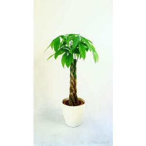 観葉植物 開店祝い パキラ 8号(セラアート鉢入り受け皿付)|ispecial
