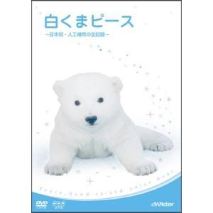 白くまピース ~日本初・人工哺育の全記録~ [DVD](中古品)|itakiti-store