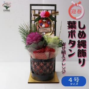 季節の寄せ植え 迎春しめ飾り 花苗  4号 1個売り フラワーギフト 贈り物 インテリア 窓辺 送料無料|itanse