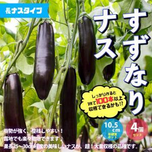 ナス苗 すずなりトロトロなす(長ナスタイプ) 野菜苗 自根苗 10.5cmポット 4個セット|itanse