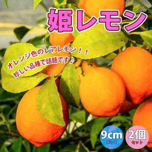 レモン苗 姫レモン 果樹苗 9cmポット 2個セット 人気の柑橘類の苗 送料無料|itanse