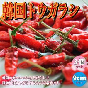 トウガラシ苗 野菜苗 韓国とうがらし 自根苗 9cmポット 3個セット 送料無料|itanse