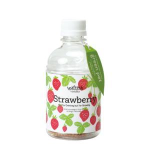 育てるグリーンペット ワイルドストロベリー ペットボトルで育てる水耕栽培セット 1個 送料無料|itanse