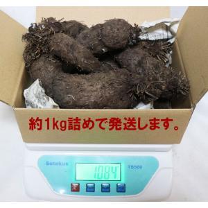 紫山いも(大薯) 約1kg アントシアニンたっぷり 芋の中まで濃い紫の希少品種 送料無料|itanse