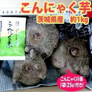 こんにゃく芋(青果) 土つき約1kg+こんにゃくの素25g 送料無料|itanse