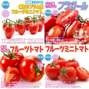 トマト苗 人気フルーツトマト系品種 4種4個セット販売 野菜苗 自根苗 9cmポット 送料無料 お買い得セット7|itanse